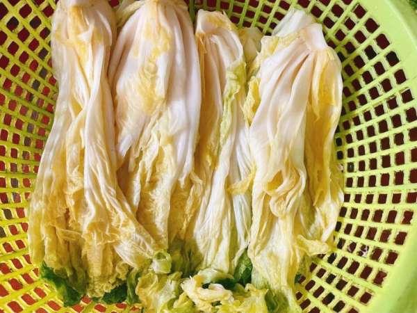 CÁCH LÀM Kimchi 3 CHIẾC CAM SIÊU NGON