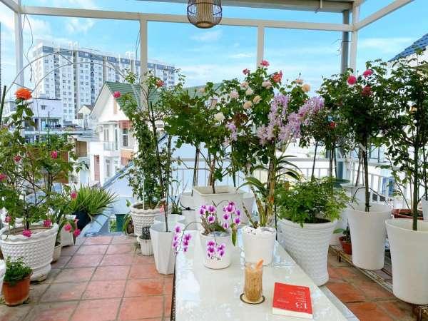 [Kinh Nghiệm] Cách trồng hoa Hồng tại nhà, trên sân thượng 2