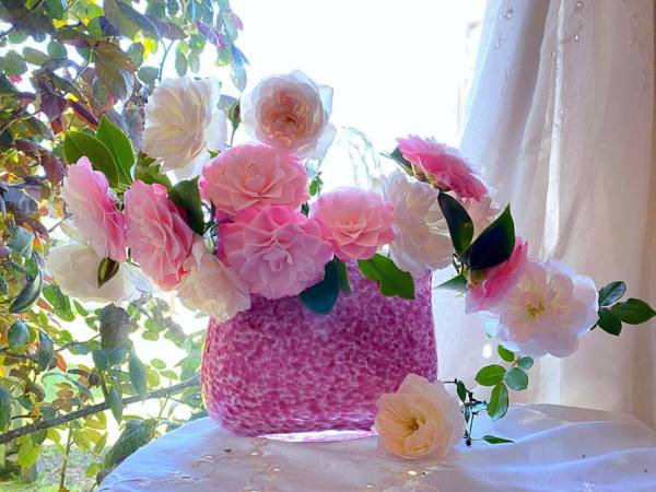 Giới thiệu về Hoa Trà - Trên thế giới có khoản 300 loài Camellia 24