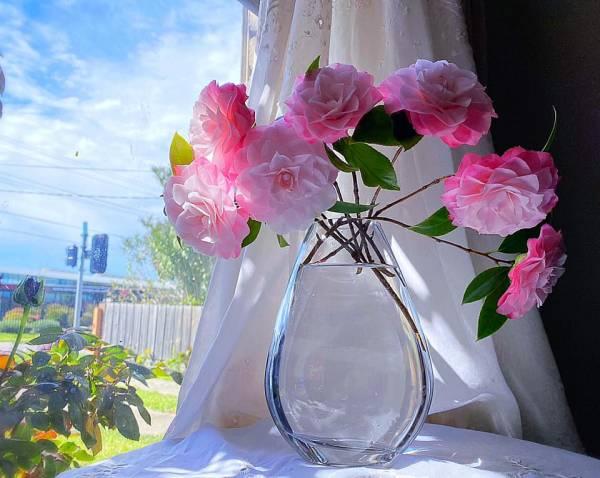 Giới thiệu về Hoa Trà - Trên thế giới có khoản 300 loài Camellia 4