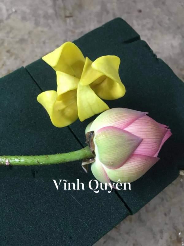 Phân Biệt HOA HOÀNG LAN, MÓNG RỒNG VÀ HOA DẺ CÓ PHẢI LÀ MỘT? 3