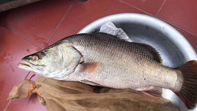 Cách làm món Cá vược hấp xì dầu - Cá vược làm món gì ? 2