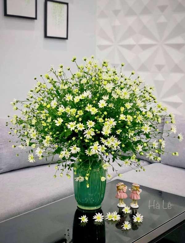 Cách chọn và cắm hoa Cúc Họa Mi 4