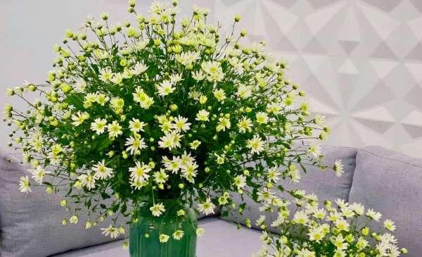 Cách chọn và cắm hoa Cúc Họa Mi 13