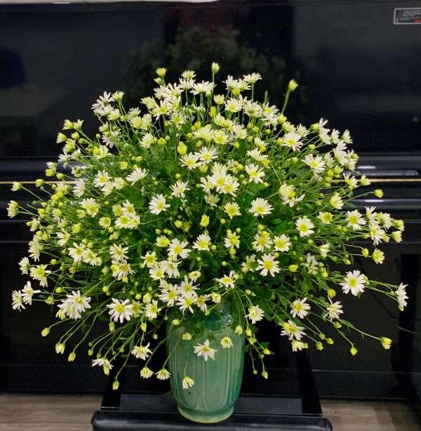 Cách chọn và cắm hoa Cúc Họa Mi 2